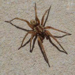 Уничтожение пауков в Череповце